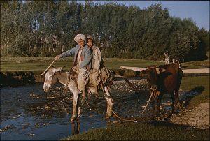 Boys on donkey Afghanistan 1976