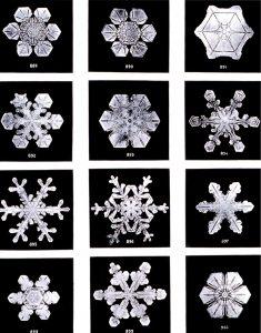 SnowflakesWilsonBentley e1538679775149